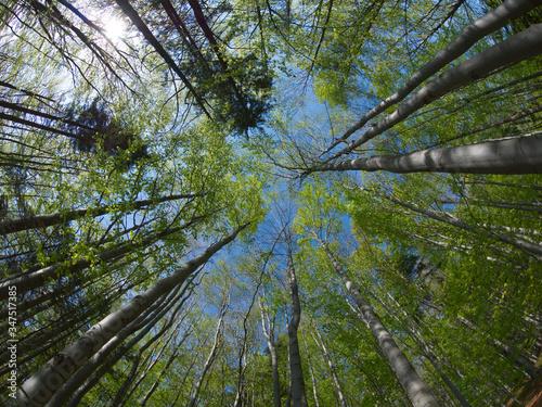 Bukowy Las - korony drzew