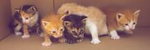 Cute Newborn Kittens Are Walki...