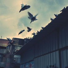 Blurred Motion Image Of Pigeons On Roof Against Sky