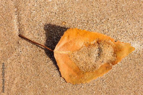 Fotografija A lone cottonwood has captured a small amount of windswept sand as it lies on th
