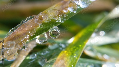 Close-up Of Water Drops On Leaf Fotobehang