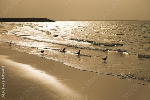 Photo Texture of wet sand