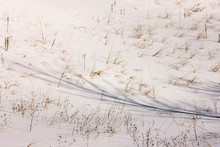 Dune Grass And Shadows Break T...