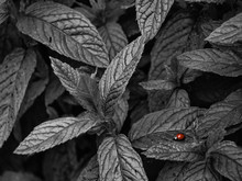 High Angle View Of Ladybug On ...