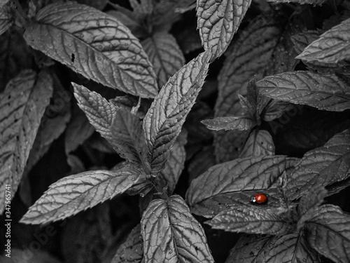 Fototapeta High Angle View Of Ladybug On Plant