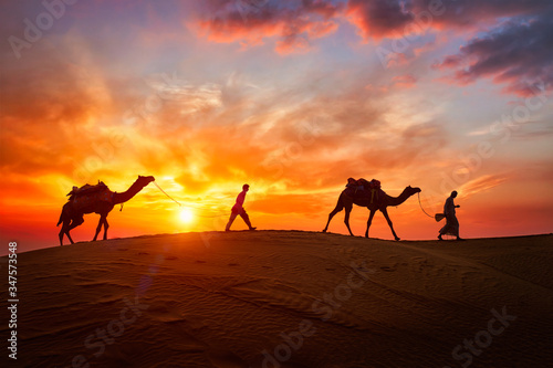 Fotografija Indian cameleers (camel driver) bedouin with camel silhouettes in sand dunes of Thar desert on sunset