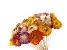 Close Up Colorful Blooming Fake Flowers Made From Sawdust With Flower Stalk Made Of Bamboo Isolated On White Background, Bouquet Of Small Artificial Fancy Gerbera For Decorating, Selective Focus