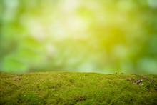 Beautiful Green Moss On The Fl...