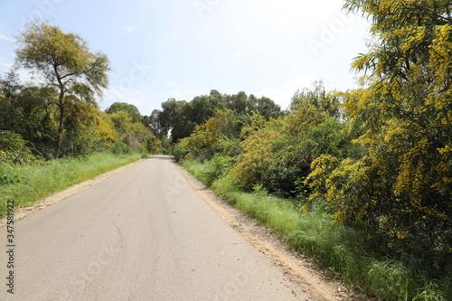 Fototapeta rural dirt road. The road passes in a forest in northern Israel obraz na płótnie