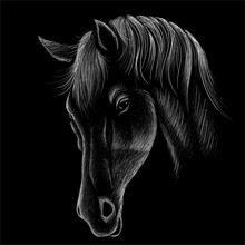 The Vector Logo Horse For T-sh...