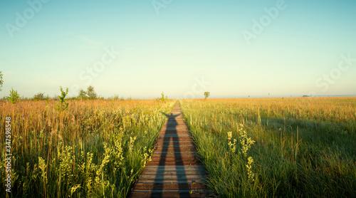 Obraz Panorama of Biebrza National Park - birds natural reserve on Podlasie, Poland - fototapety do salonu