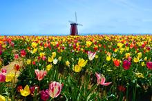 Magic Tulip Fields In Washingt...