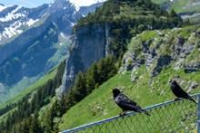 Two Black Birds Enjoying The M...