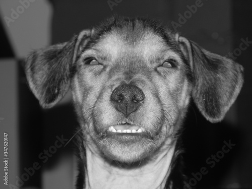Fotografia Close-up Portrait Of Dog