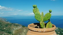 Close-up Of Prickly Pear Cactus By Sea Against Sky