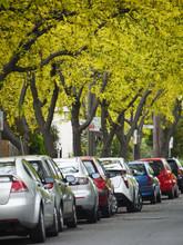 Cars Parked Under Green Trees Along The Side Of The Road In A Residential Area With A Sign Says 'permit Zone'. Family Cars Parked At Melbourne's Quiet Suburban Street. Footscray, VIC Australia.