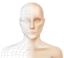 3D Modeling Vector Background. Half Transparent Face Of A Caucasian Young Man With Polygonal Lines, Isolated On A White Background. Model Sculpting And Rendering Concept Illustration.