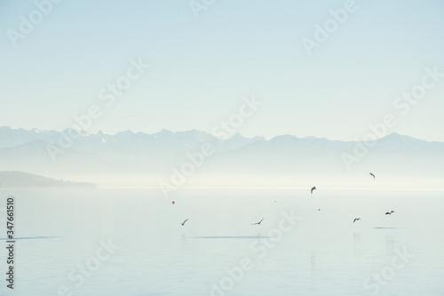 Lago con niebla, bosque y patos Canvas Print