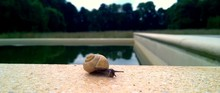Snail On Wall By Pond