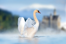 White Swan In Lake On Castle And Mountain Background