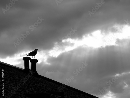 Photo Low Angle View Of Bird Perching On Smoke Stack Against Cloudy Sky
