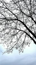 Low Angle View Of Bare Tree Branches Against Sky