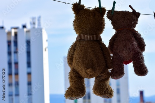 A teddy bears hangs from a clothesline after a washing #347710308