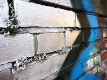 Flowers On Brick Wall With Graffiti