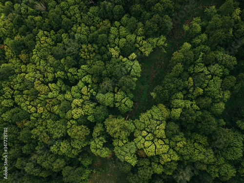 View of the green forest from above. Beautiful aerial picture. Abstract texture concept. Postcard of structure. Ecological scenery woodland and nature.