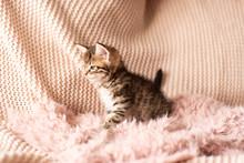 Cute Little Red Kitten Sleeps ...