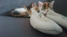 Close-up Of Kittens Sleeping By White Slippers On Sofa At Home