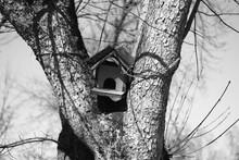Birds Tree House