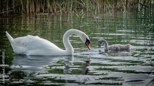 polske jeziora i zwierzeta