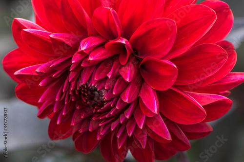 Obraz na plátně Close-up Of Red Flower