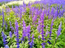 Purple Flowers Blooming On Field