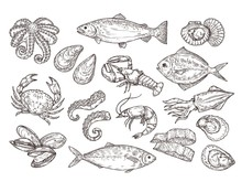Seafood Sketch. Vintage Fish, ...