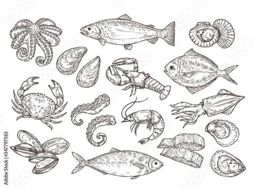 Fototapeta Seafood sketch