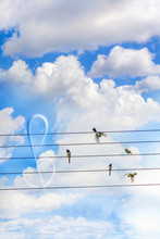 Five Birds Land And Sitting On The Wires Like On A Stave