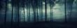 Leinwandbild Motiv dark mysterious forest panorama, fantasy landscape