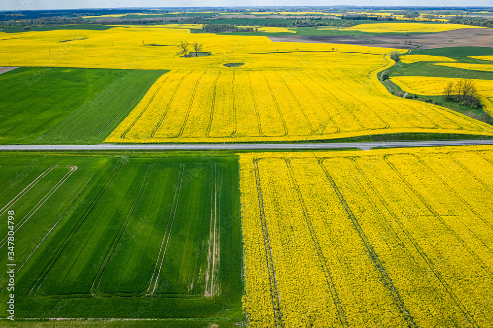 Fototapeta Green and yellow rape fields in Poland, Europe