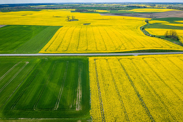 Green and yellow rape fields in Poland, Europe
