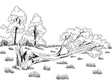 Broken Tree Graphic Black White Sketch Illustration Vector
