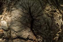 ORGANIC TREE TEXTURE SEEMING T...