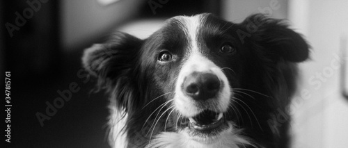 Close-up Portrait Of A Dog Slika na platnu