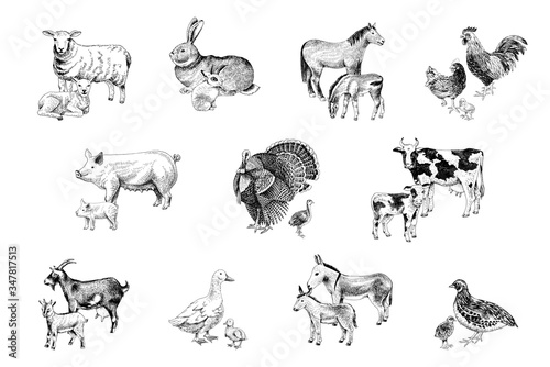 Papel de parede Large set of farm animals with their babies