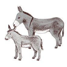 Hand Drawn Donkey And Foal. Farm Animal Familie