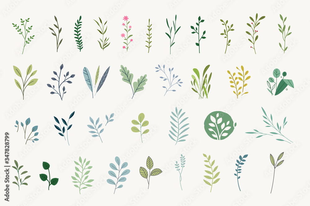 Fototapeta Set of natural and floral elements for graphic and web design. Vector illustrations for natural and organic products, beauty, fashion, spa and wellness, wedding and events, environment.  - obraz na płótnie