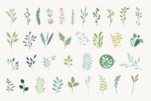 Set Of Natural And Floral Elem...