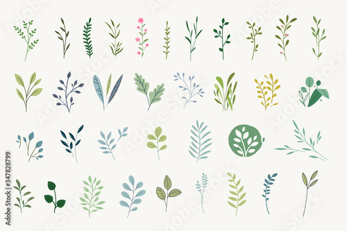 Fototapeta Set of natural and floral elements for graphic and web design. Vector illustrations for natural and organic products, beauty, fashion, spa and wellness, wedding and events, environment.  obraz
