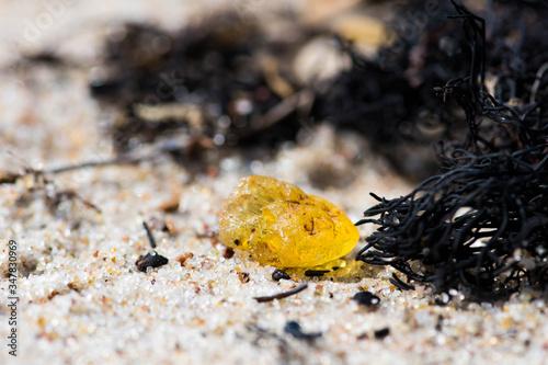 Foto Beautiful piece of amber among the seaweed or algae on the sandy beach